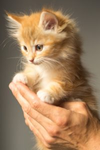 ginger kitten in a person's hand
