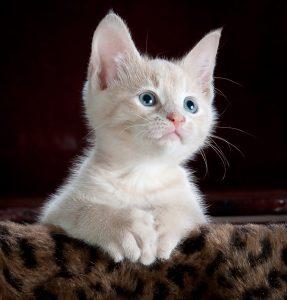 kitten posing for the camera