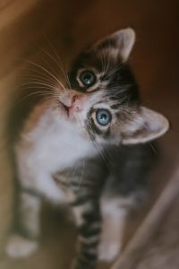 Cute kitten looking up at something...perhaps a bird