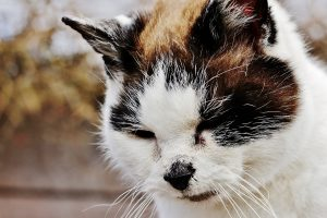 Cat waiting for topical flea treatment