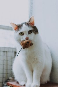 Cat with a mouse toy in its mouth