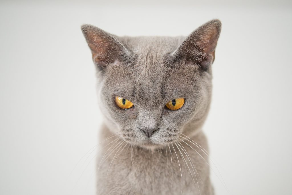 Gray cat not happy with your litter choice