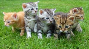 kittens standing together