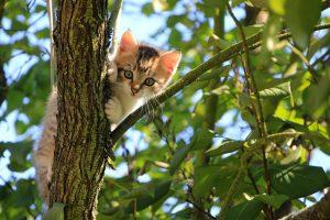 Kitten hunting in a tree
