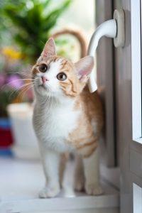 orange-tabby-cat-near-window
