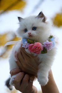 person holding white kitten
