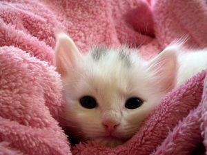 young kitten needs larger pellet non-clumping litter