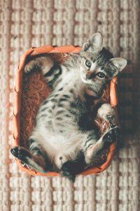 tabby kitten lying in a basket