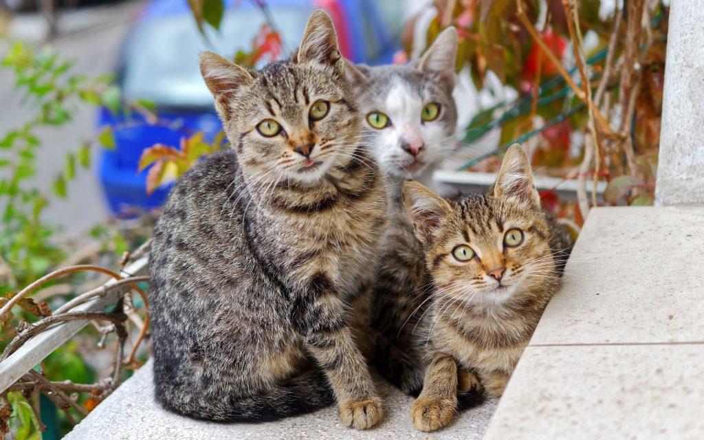 multiple cat household