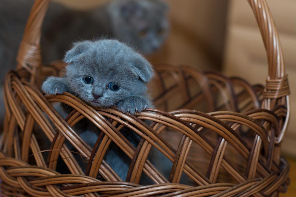 Kitten-special litter