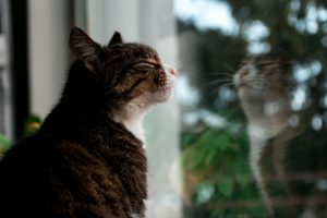 cat looking out a window