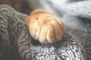 ginger cat paw