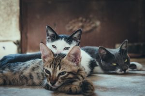3 cats sleeping together