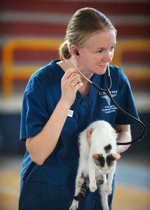 veterinarian listening to a cat's heart