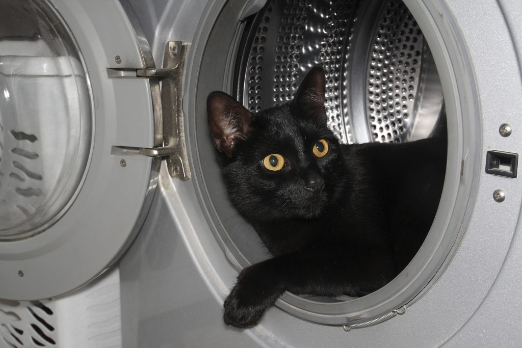 black cat in dryer