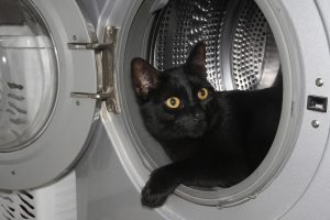 black cat in dryer