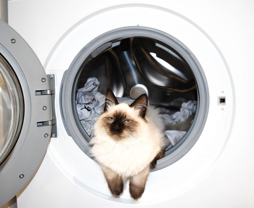 Cat Looking out of washer