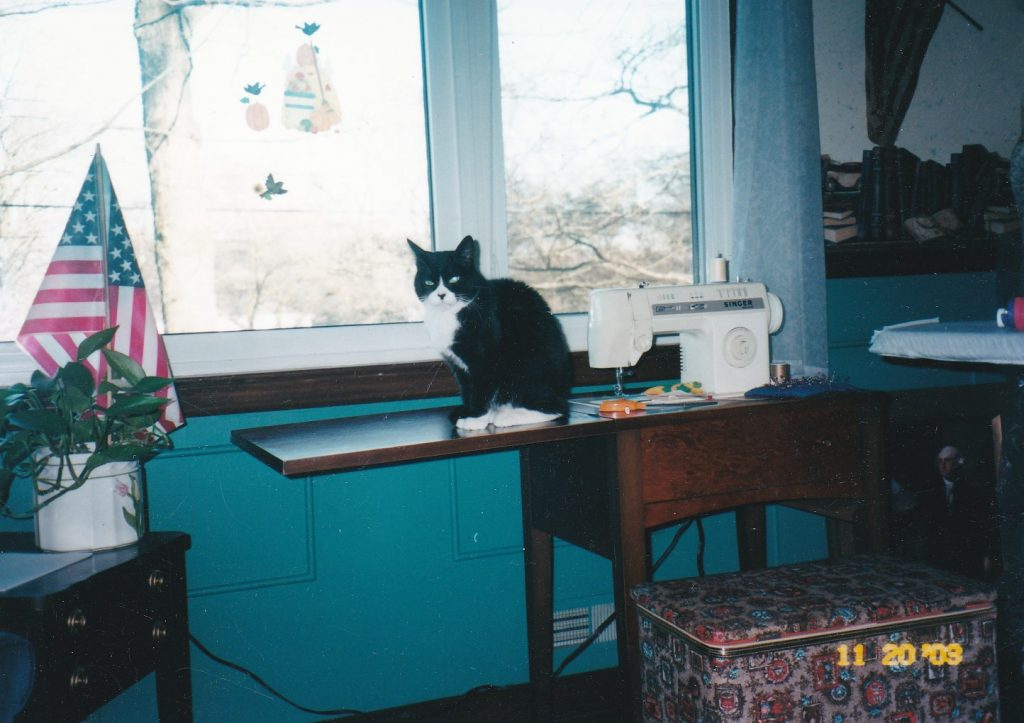 Chloe sitting on a sewing machine table