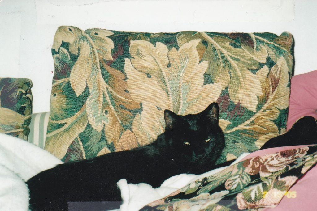 Mr. Jones relaxing on the sofa