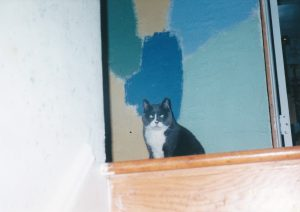 Tulip sitting at the top of stairs