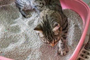 cat covering waste in clay litter box