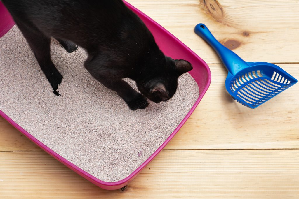 Cats have to like the litter box