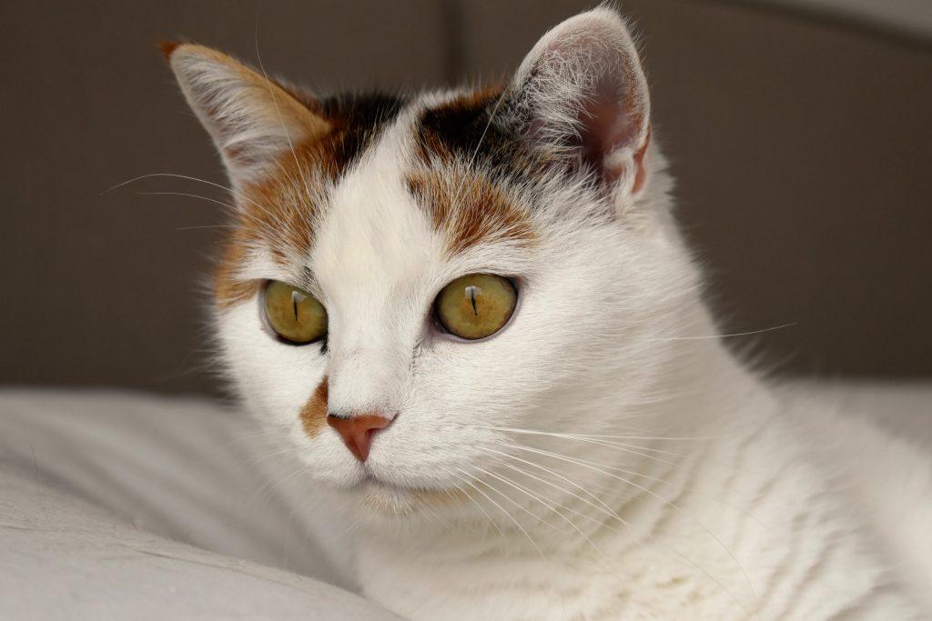 cat interested in litter