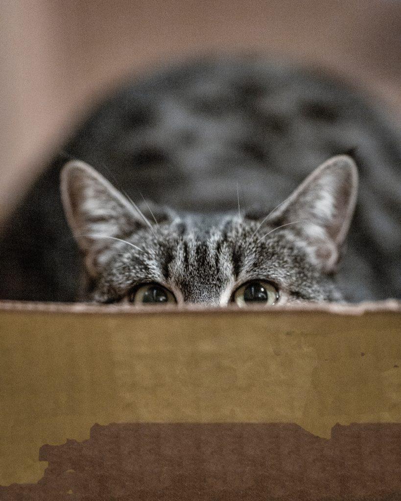 tabby peeking over edge of a box