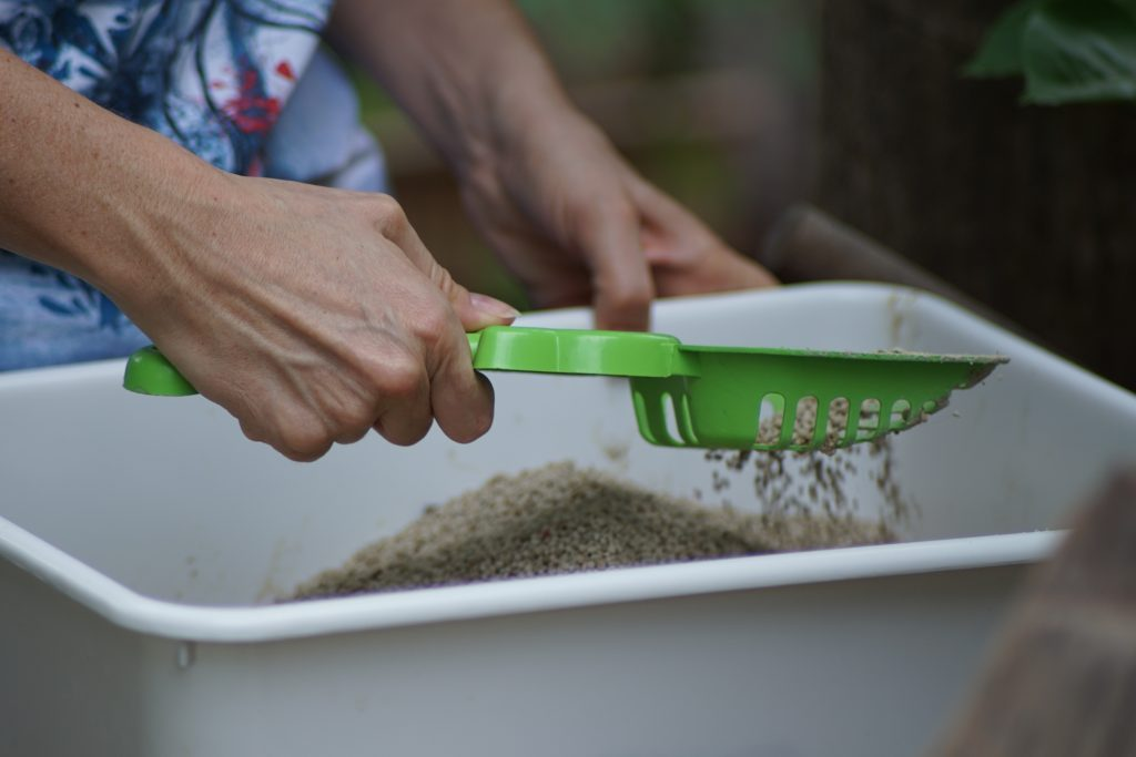 person cleaning a cat's litter box