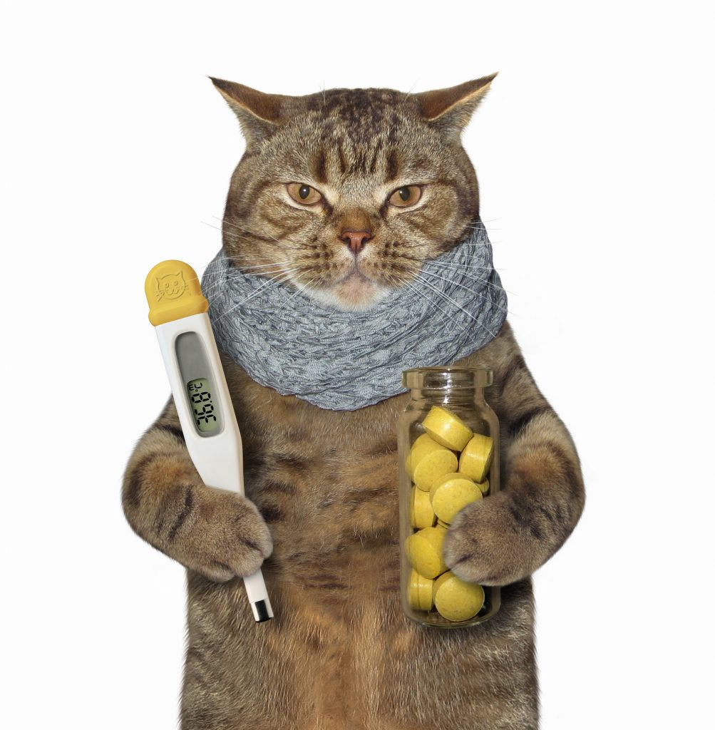 sick cat holding thermometer and pills