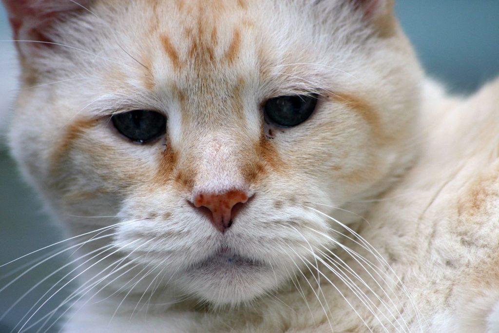 sad looking cat