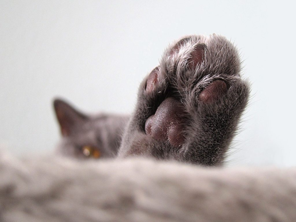 grey cat's head and paw