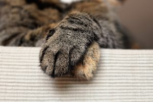 Tabby cat paws crossed
