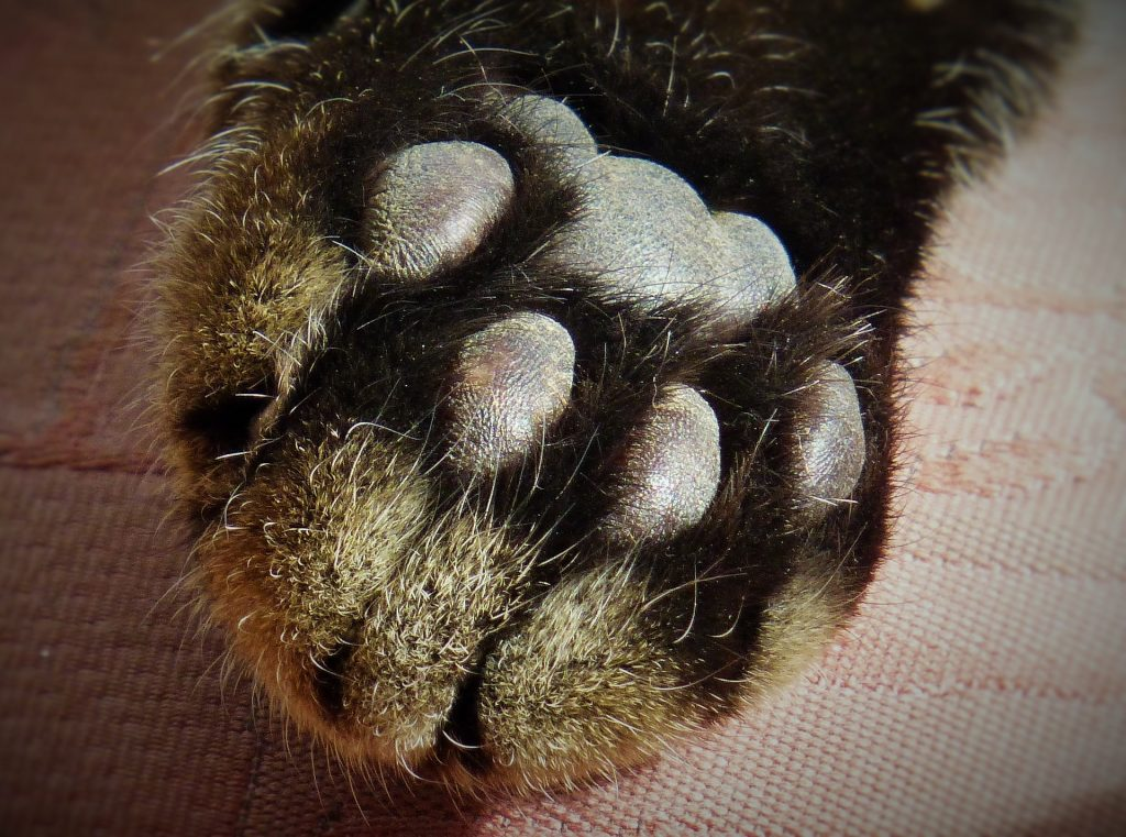 Black cat paw/toes-litter box sensitivity