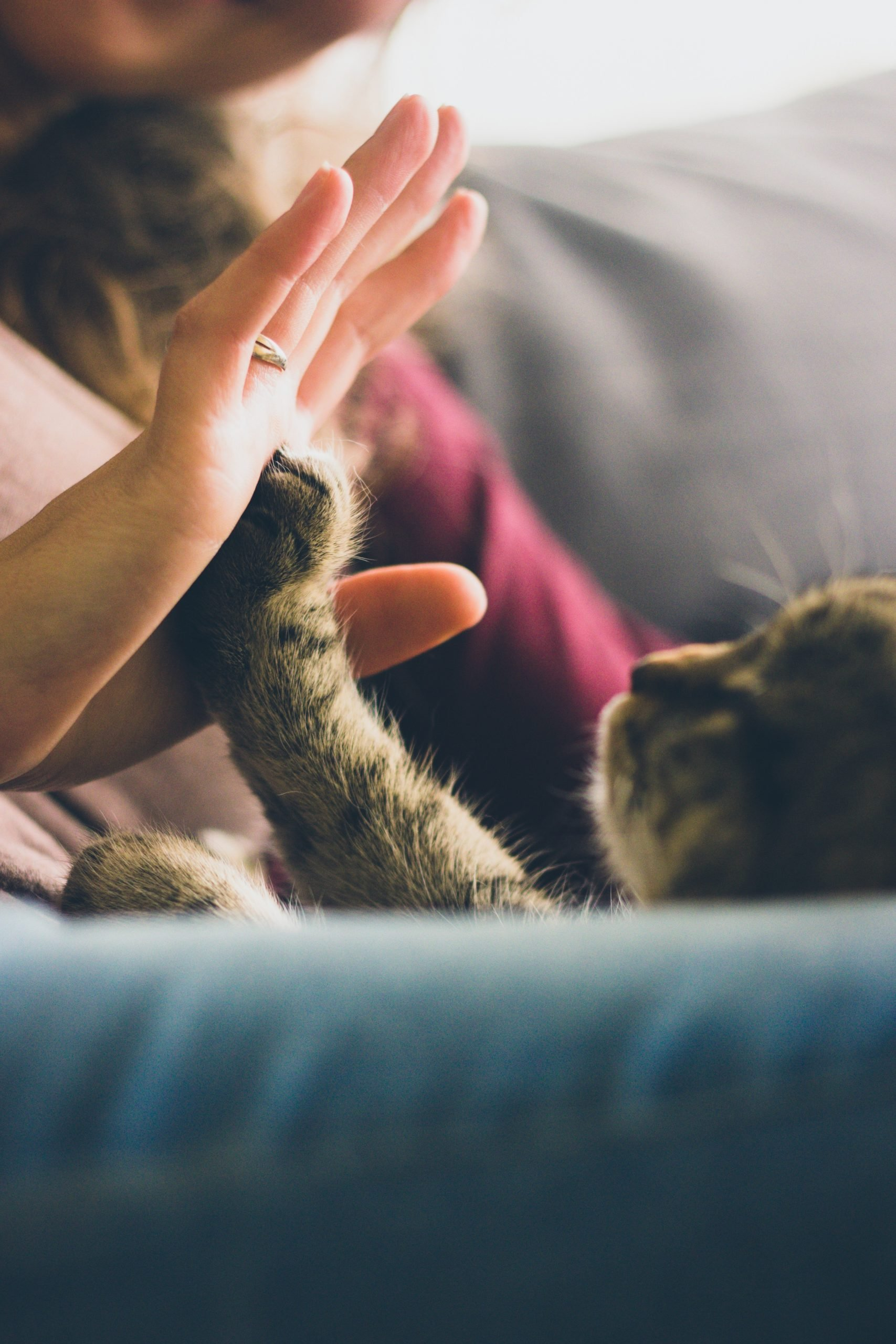 hand-to-paw