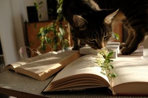 """Cat """"reading"""" a book"""