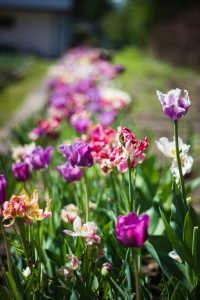 flower bed-litter mulch; flower essences