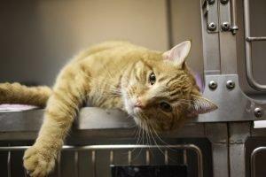 cat in a vet's cage