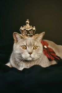 cat wearing a show crown and ribbon