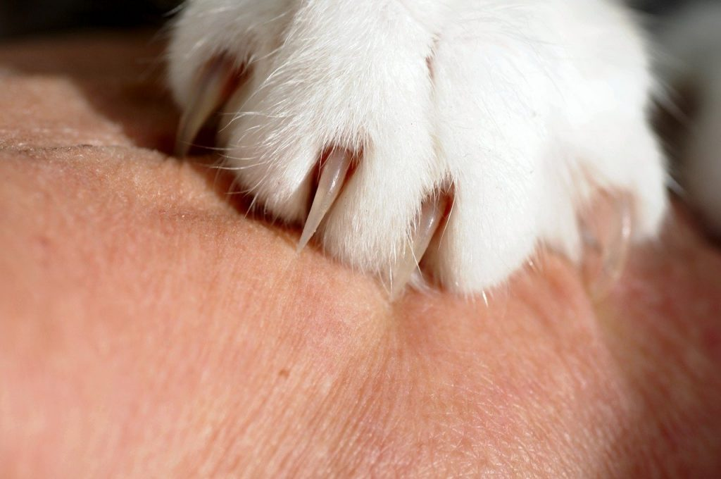 cat claws - can scratch holes in litter liners