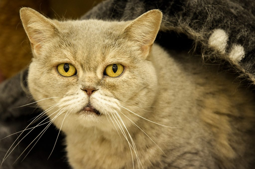 elderly kitty