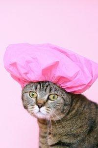 cat in shower cap