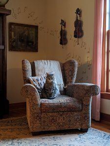 cat in a chair