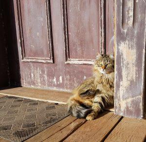 cat sitting in doorway - preparing for a lost cat