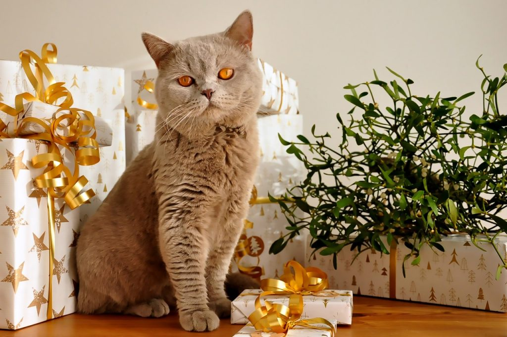 grey cat sitting by gifts