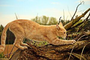 cat scratching a branch