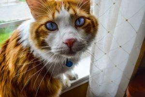 scruffy older cat