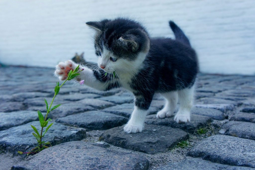 kitten playing with a weed