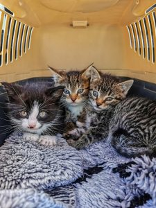 kittens in a carrier