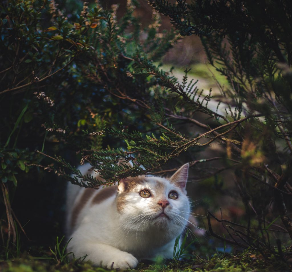 cat watching something in a tree